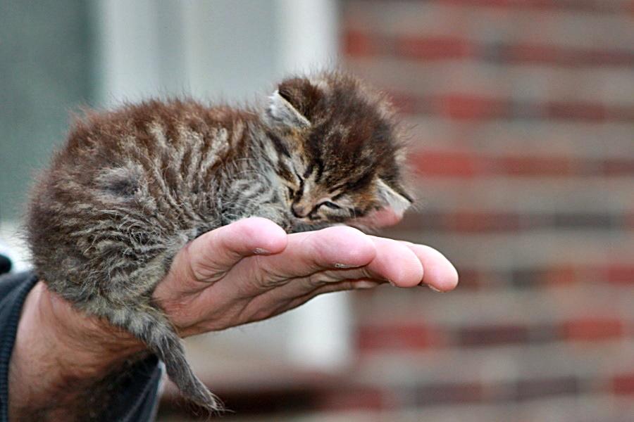 Kastrationspflicht von Katzen